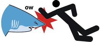 Shark in nose